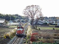 Tokiwaji20121202_14