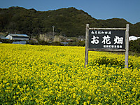 Wadaura20130224_01