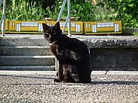 Isumi_kuniyosi20130428_03