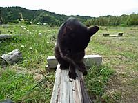 Isumi_kuniyosi20130525_02
