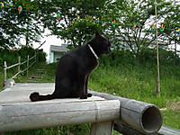 Isumi_kuniyosi20130525_03