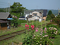 Isumi_nakagawa20130605_00