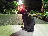 Isumi_hotaru20130614_17
