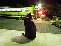 Isumi_hotaru20130614_19