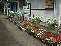 Isumi_rail20130812_04