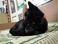 Isumi_kuniyosi20130911_04