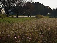 Isumi350_20131105_02