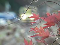 Isumi200_20131212_01