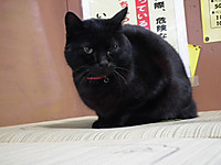 Isumi_kuniyosi20131211_01
