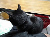 Isumi_kuniyosi20131219_05