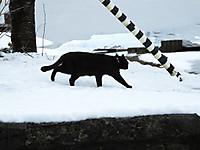 Isumi_kuniyosi20140215_08