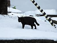 Isumi_kuniyosi20140215_09