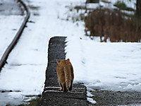 Isumi_kuniyosi20140215_13
