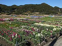 Minami_boso_free20140216_32
