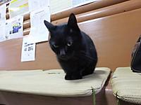 Isumi_kuniyosi20140227_09