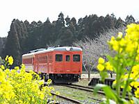 Isumi_kiha52_20140309_03