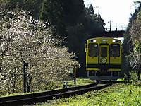 Isumi300_20140323_08