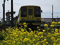 Isumi200_20140329_03