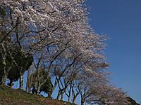 Isumi_otaki20140331_06