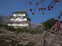 Isumi_otaki20140331_07