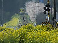 Isumi350_20140402_02