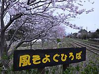 Isumi_kuniyosi20140402_10