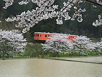 Isumi_kiha52_20140403_13