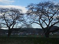 Sendaikinko20140406_02_2