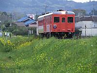 Isumi_kiha52_20140420_15