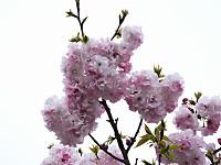Isumi_nakagawa20140423_02