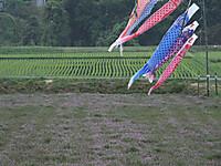 Otaki_renge20140505_19