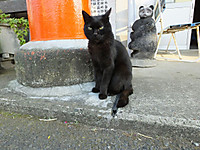 Isumi_kuniyosi20140531_05