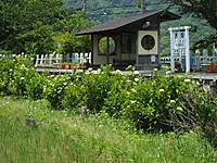 Isumi_nisihata20140602_02