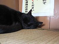 Isumi_kuniyosi20140618_02