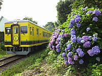 Isumi350_20140623_04