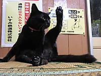 Isumi_kuniyosi20140828_04