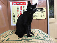 Isumi_kuniyosi20140916_07
