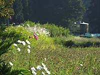Isumi350_20140929_01
