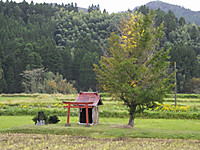 Isumi_rail20141015_03