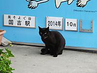 Isumi_kuniyosi20141021_01