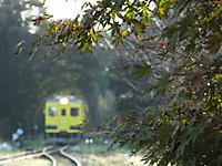 Isumi350_20141104_03
