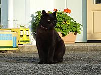 Isumi_kuniyosi20141111_01