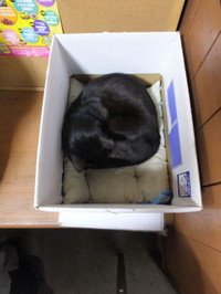 Isumi_kuniyosi20141202_10