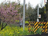 Isumi_rail20150321_05