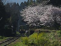 Isumi200_20150402_02