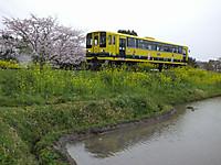 Isumi200_20150404_02