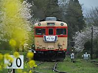 Isumi_kiha28_20150404_09