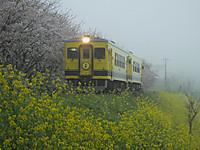 Isumi350_20150406_02
