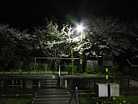 Isumi_kuniyosi20150406_09