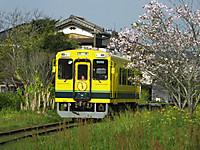 Isumi300_20150419_01